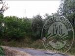 Immagine di ES. 392/2014 CUSTODIA - LOTTO II: TERRENO SITUATO NEL COMUNE DI LUCCA, FRAZ. BALBANO, VIA DEL BARBA.