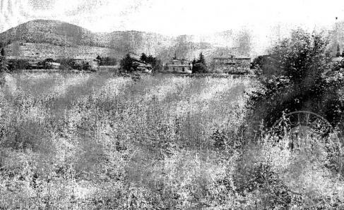 Immagine di TREVI (PG) LOCALITA' S. MARIA IN VALLE LOTTO 2